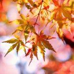 Höstens hetaste färger